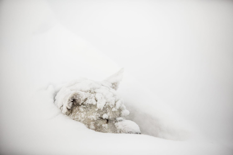 polar2014_h8b2107